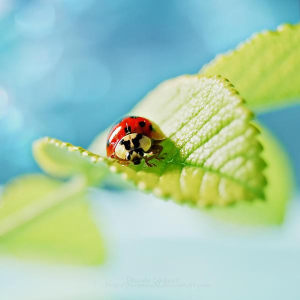 ..Ladybug.. by fruitpunch1