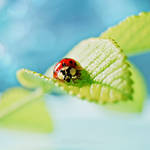 ..Ladybug..