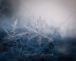 .Snowflake. by fruitpunch1