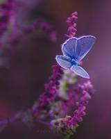 .Butterfly.