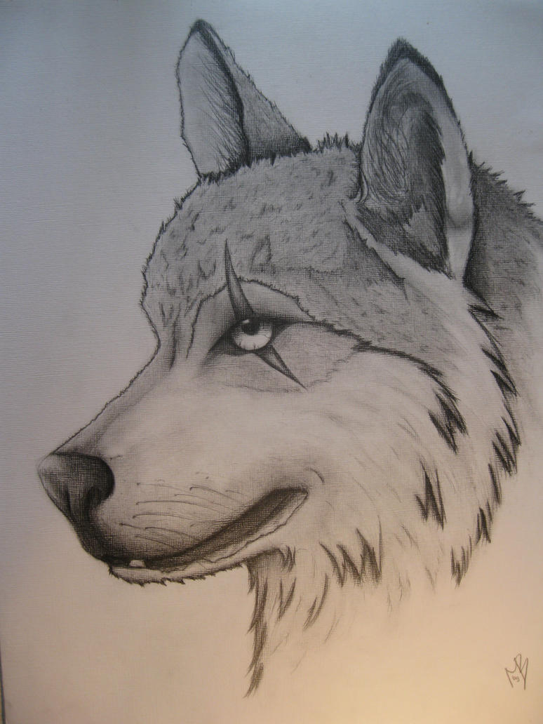 Scarred wolf by TigressDrawing on DeviantArt