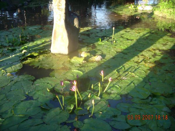 Jardin japones escobar by stephigdc on deviantart for Jardin japones de escobar