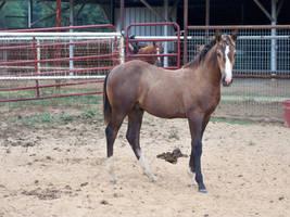 foal 2 by londondesgins
