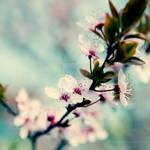 kwiaty jak na wiosne
