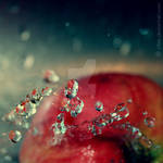Water on apple by xTive