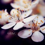 love flowers II