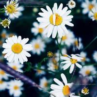 kwiatki by xTive