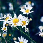 kwiatki II