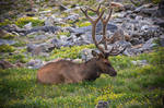 Elk 3