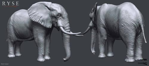 Elephant Highpoly by Bruno-Camara