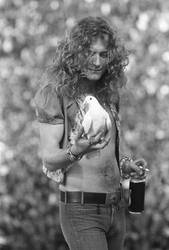 Robert Plant with dove