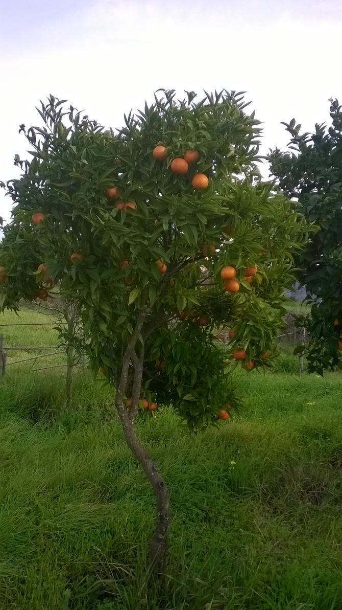 the orange tree nottingham speed dating