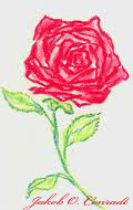 Roses by 4Blood2Rose0