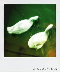 Couple  ::polaroid series:: by SaMmYCuPu