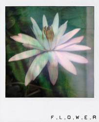 Flower  ::polaroid series:: by SaMmYCuPu