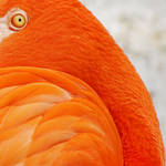 graphic flamingo by 2blueturtle