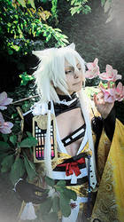 Kogitsunemaru - smells the flowers