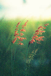 grainy fern by bumorticc