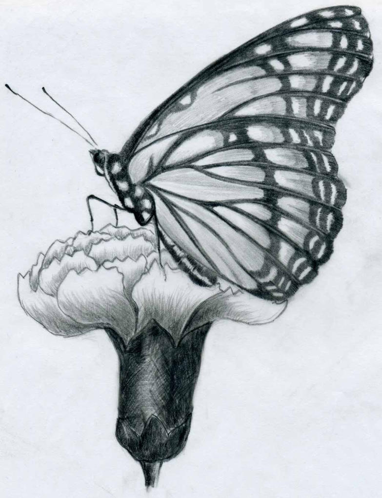 Butterfly Pencil Drawing By Finnhuman97 On DeviantArt