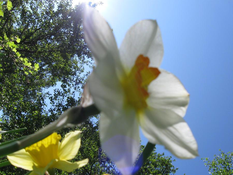 Flower, seen by a fairy? by Orkekum