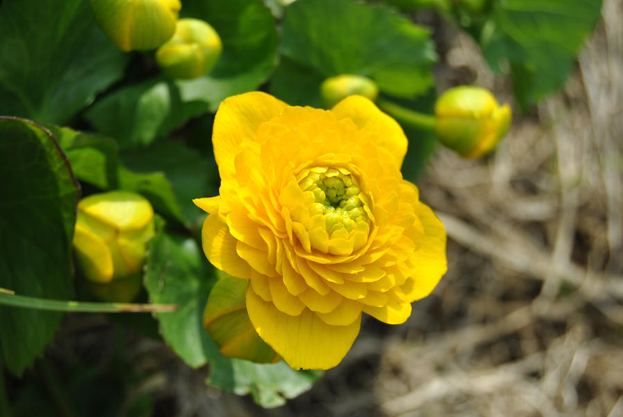 Another Flower by Orkekum