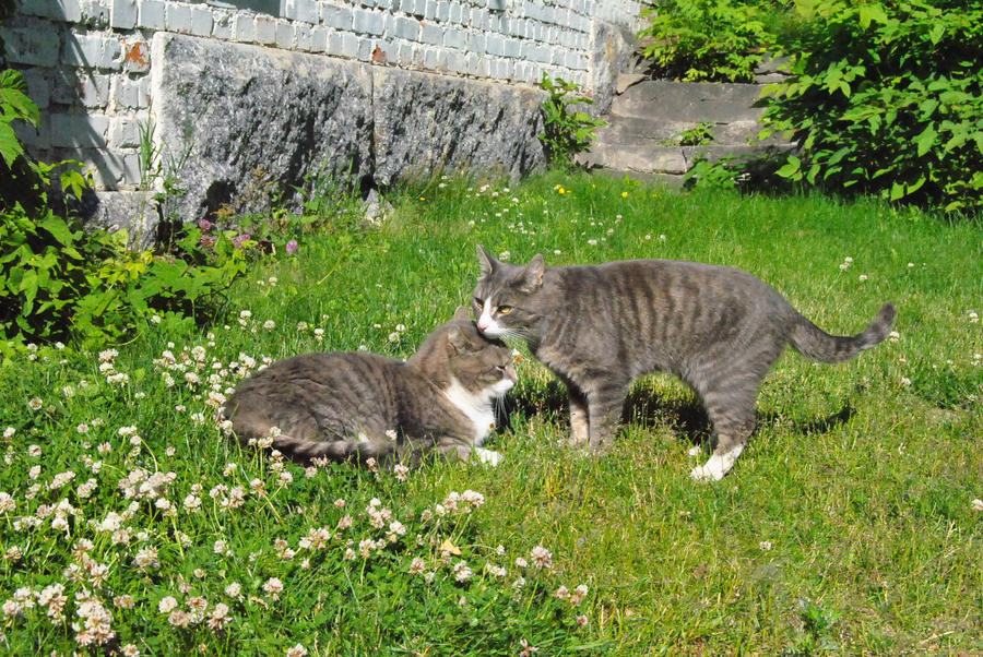 Cats by Orkekum
