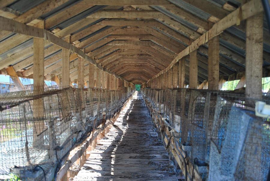 Cages by Orkekum