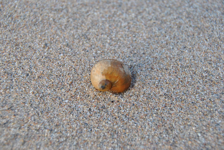 Snail Shell by Orkekum