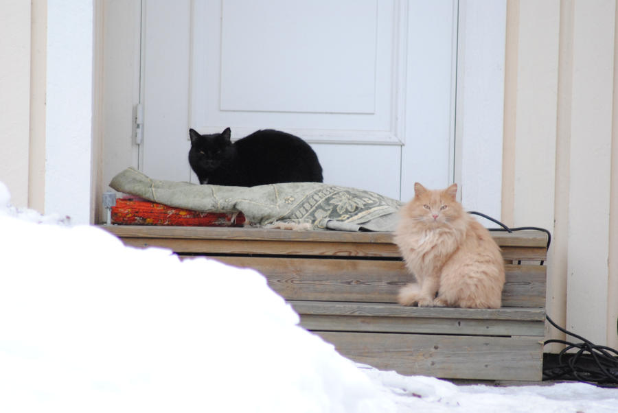 Cat guardians by Orkekum