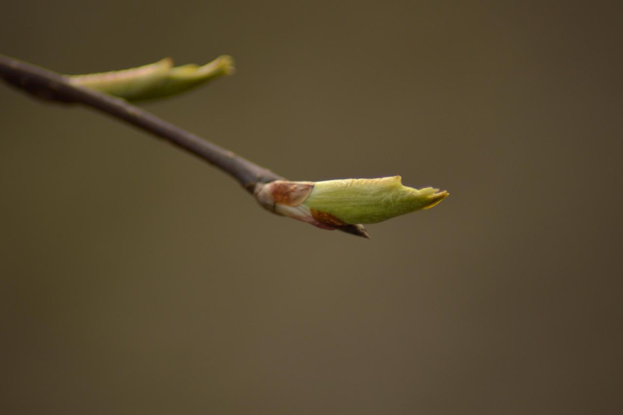 Branch by Orkekum