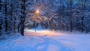 Blue evening in winter park