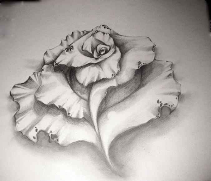 Rose by Lobsterbeef