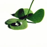Lucky Drop