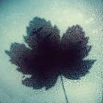 Tears of Autumn