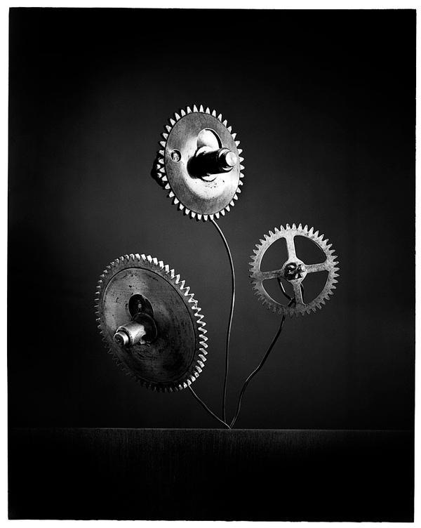 Bouquet de nerfs 8 by edredon