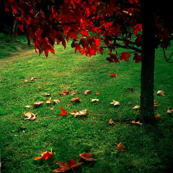 le rouge et le vert by edredon