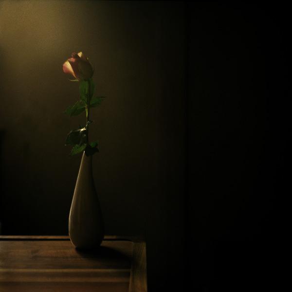 la rose by edredon