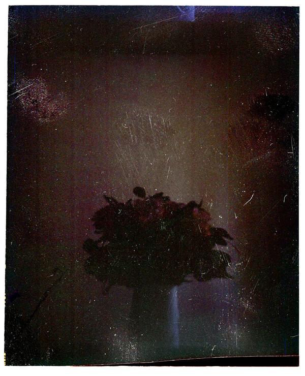 Fleur d artifice by edredon