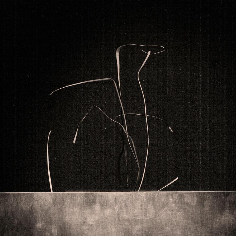 bouquet de nerf II by edredon