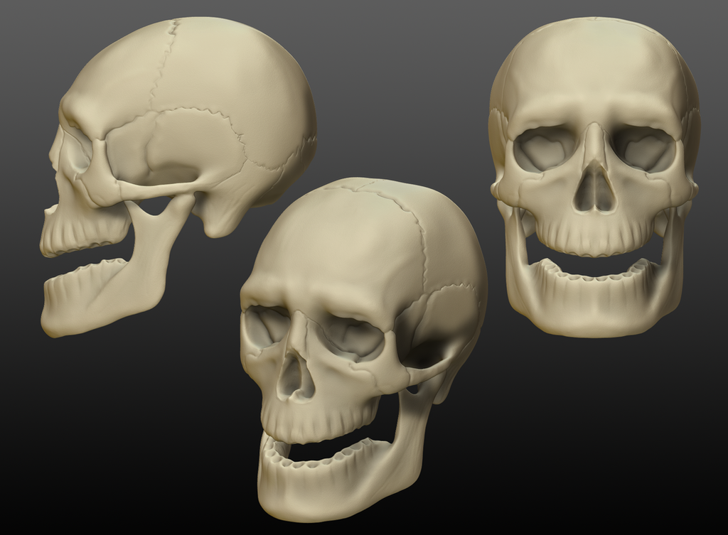 Skull by jovcov