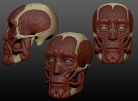 Skull Muscle by jovcov