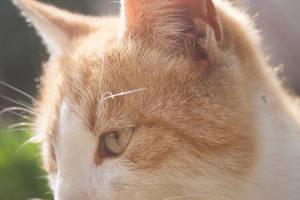 Kitty by jovcov