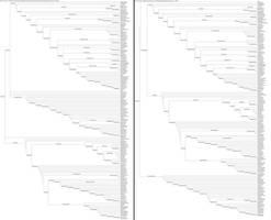 Dinosauria Phylogeny by Albertonykus