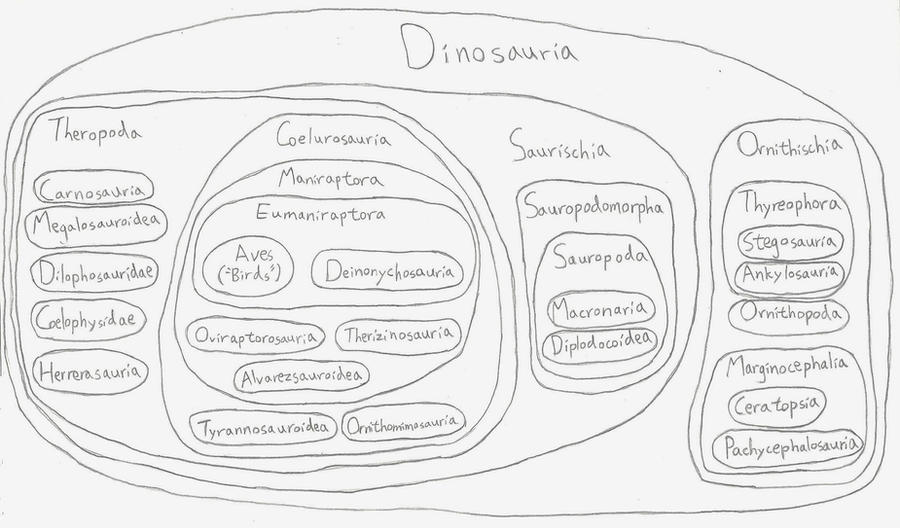 Cladogram Venn Diagram Romeondinez
