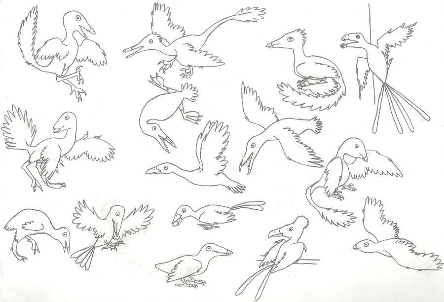 A Panoply of Pennaraptors