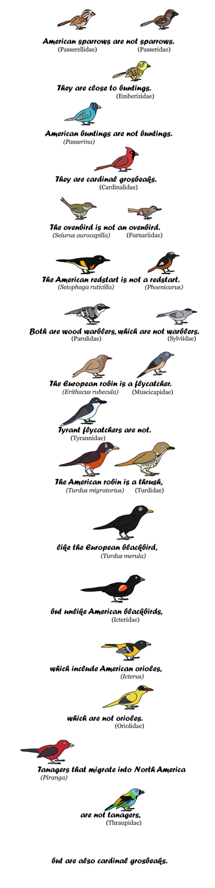 Never Trust Passerine Nomenclature by Albertonykus