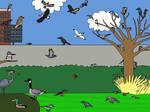 Campus Birding