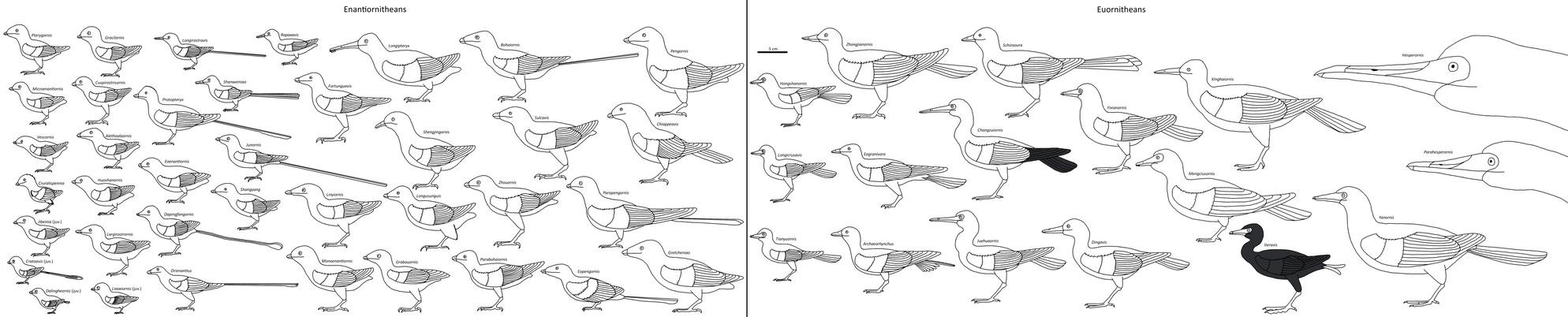 Birdbodies of the Mesozoic