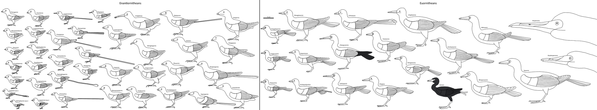 Birdbodies of the Mesozoic