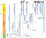 Bird Phylogeny: Galloanserans